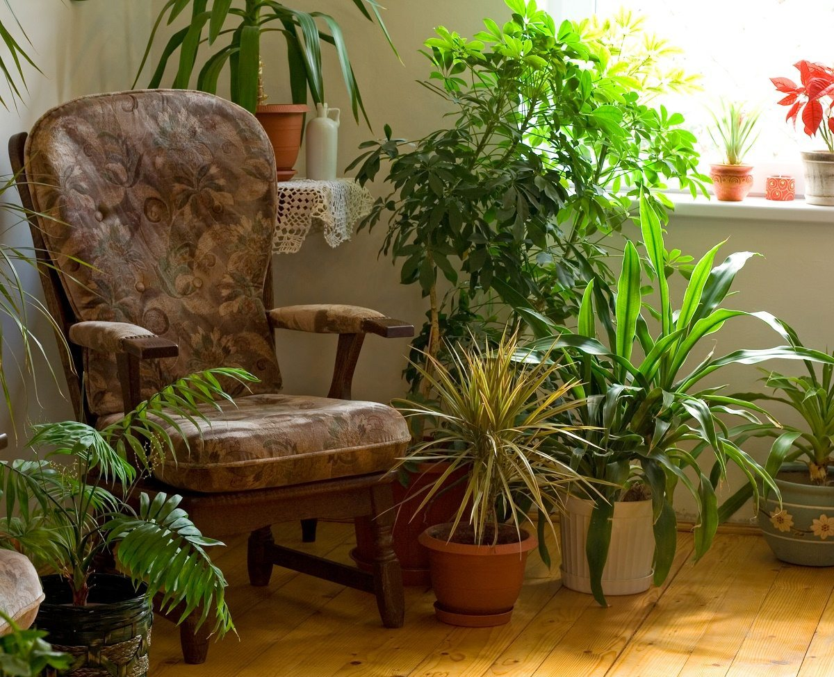 tips on caring for indoor plants