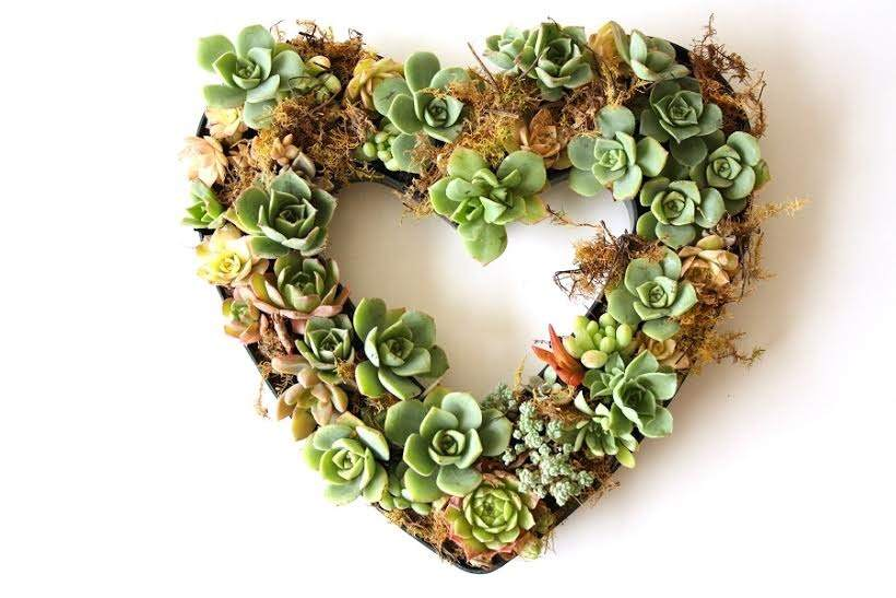 how to care for succulents with Fleurieu Gifts on the Recycled Interiors Podcast