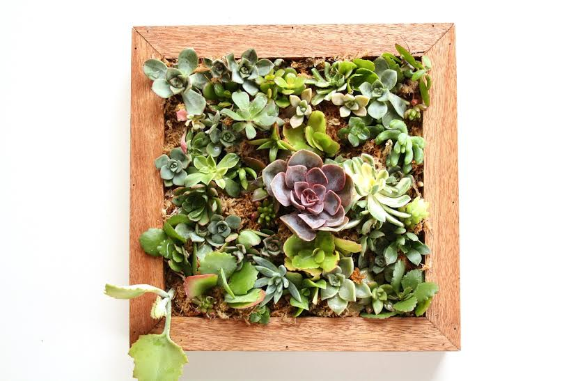 This image has an empty alt attribute; its file name is upcycled-succulents-4.jpe