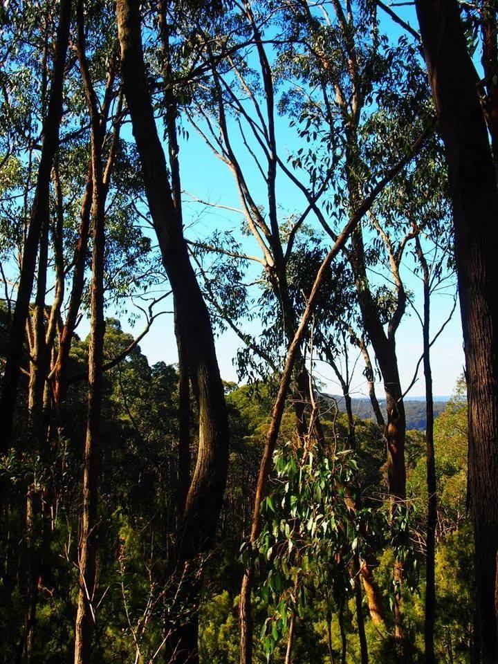 mount lofty botanic gardens 2