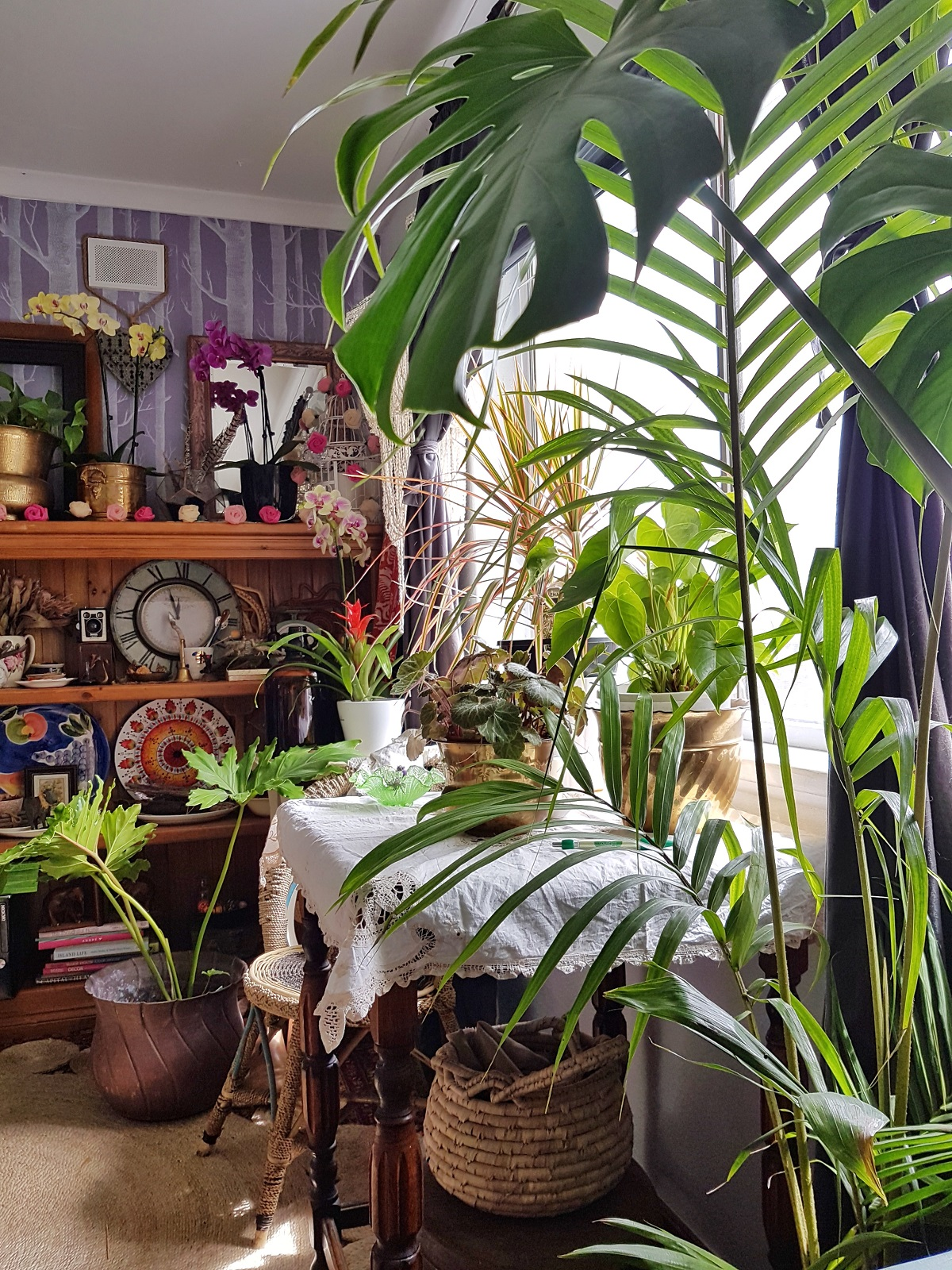 How to care for potted plants indoors and on your deck including strong of pearls, monstera and fiddle leaf fig