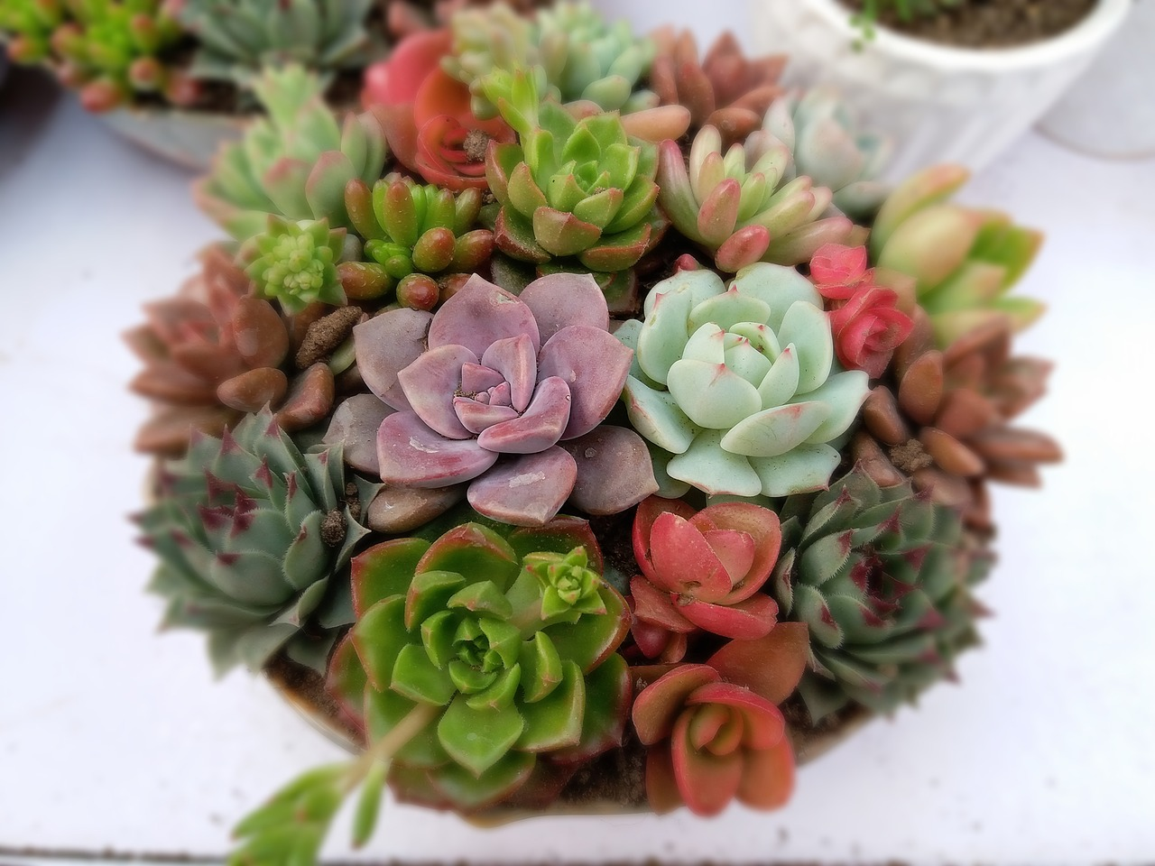 tips on caring for indoor plants succulents