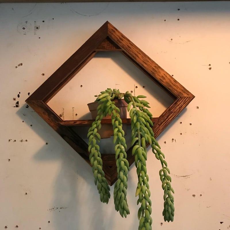 wallplanter