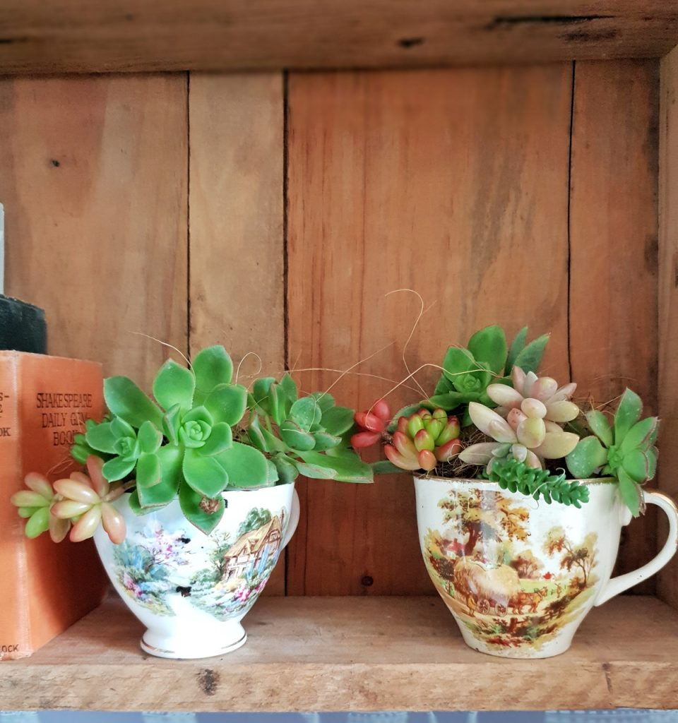 how to make teacup succulents - a very easy DIY project to do at home with vintage teacups and succulent cuttings