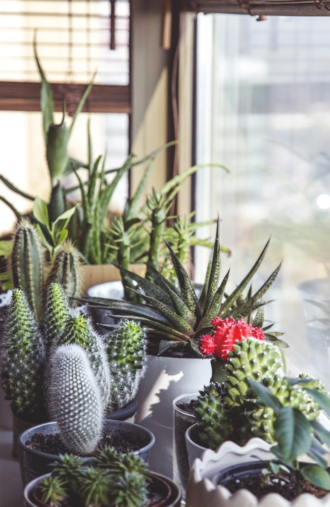 8 steps to a more sustainable home - tips on how to be more sustainable in your home and use eco friendly decorating