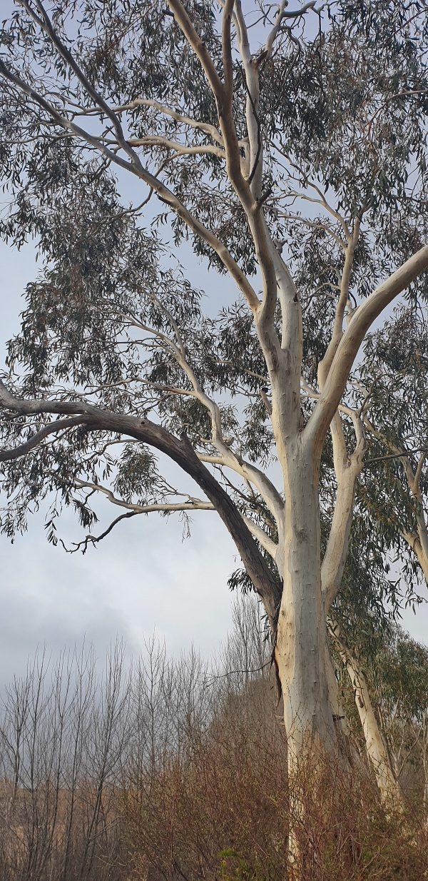 Australian bushfires 2020